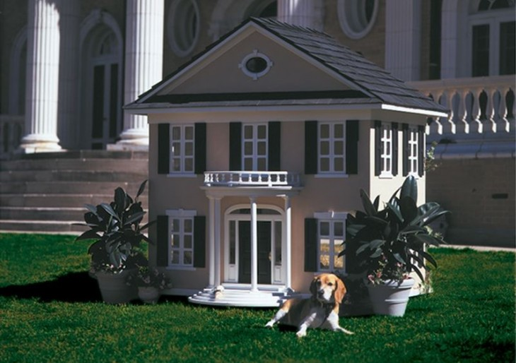 Luxury Vacation for Dogs