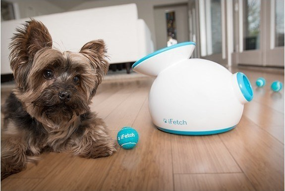 iFetch Will Play Fetch with Your Dog