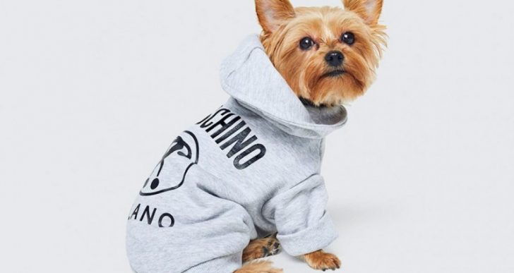 Moschino and H&M Launching Clothing Collection for Pets